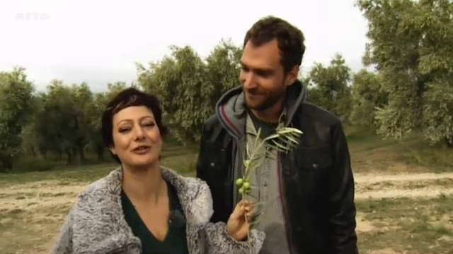L'olive : de l'arbre à la table – Xenius