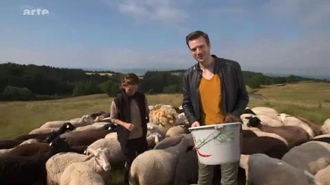 Les moutons sont-ils seulement élevés pour leur laine ? – Xenius