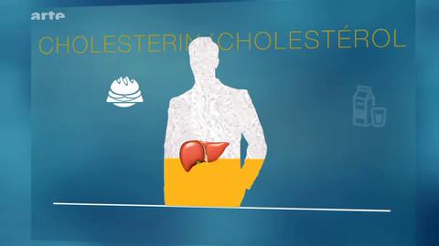 Le cholestérol : quel impact sur notre santé ? – Xenius