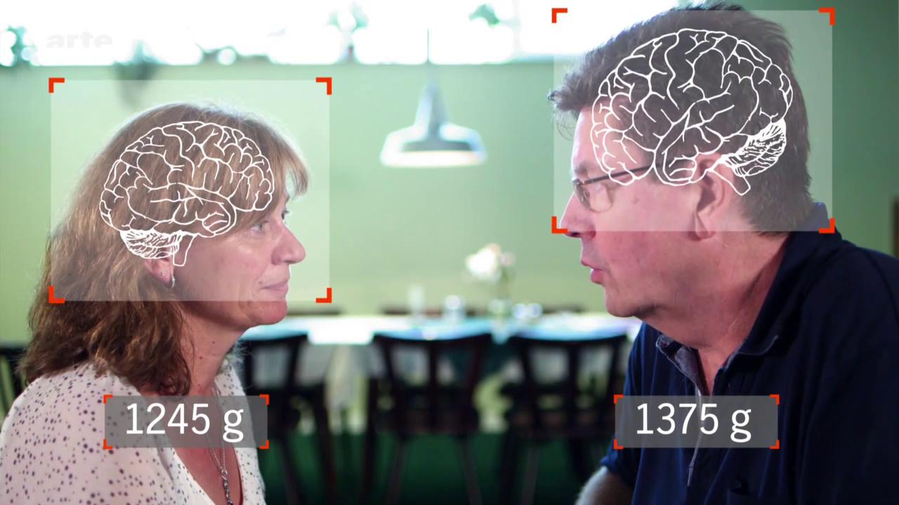 Comment fonctionne notre cerveau ? – Xenius