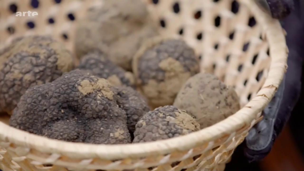 Les truffes : des trésors culinaires enfouis sous nos pieds-Xenius