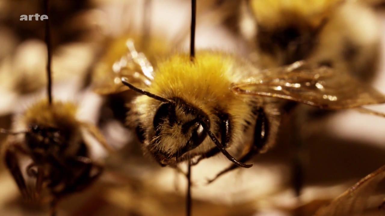 Les insectes : pourquoi sont-ils indispensables ?-Xenius